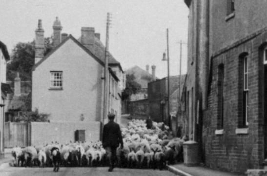 sheep_2.jpg (547×361)