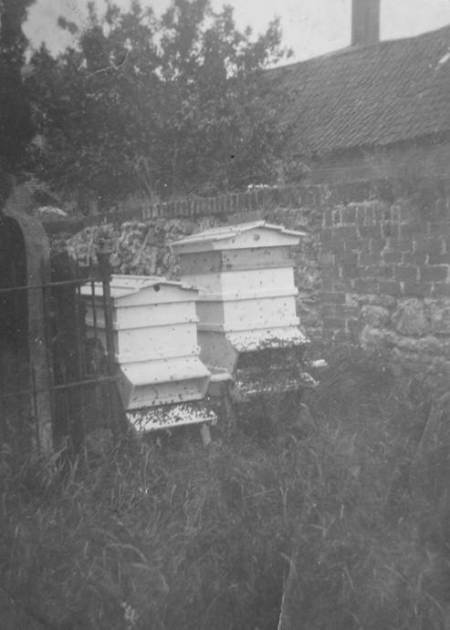 1920s photo of beehives in the garden behind the fish and chip shop in Market Lavington