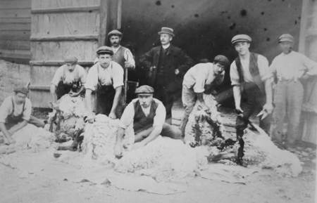 Sheep shearing at Eastcott farm - a photo at Market Lavington Museum