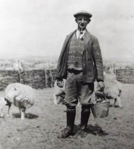 Bob Potter of Market Lavington tending his sheep