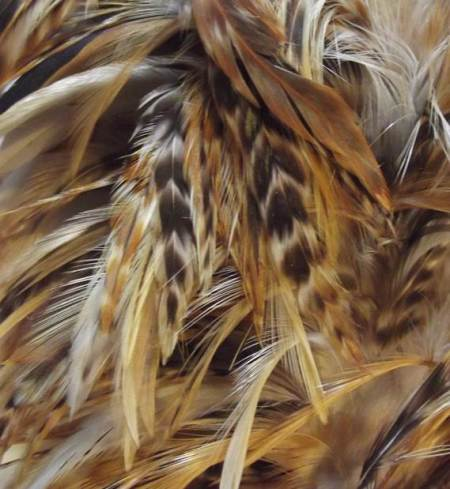 Can you identify the feathers?