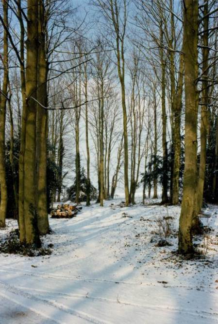 Beautiful snow in Lavington Manor woods in 1980
