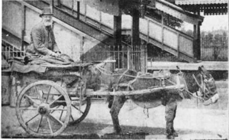 Shem Butcher and his donkey cart - ready for a customer on the opening day at Lavington Station - October 1st 1900