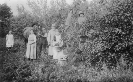 Samuel Moore and fruit pickers in Easterton - perhaps about 1918