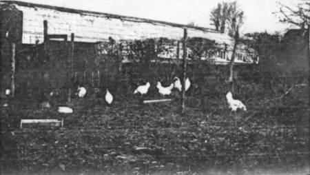 Poultry at Crossways