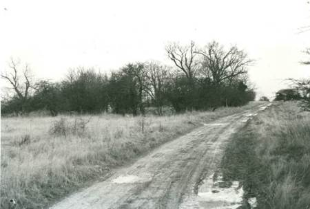 Site of Philpotts Farm still delineated by the shelter belt of trees in the 1970s