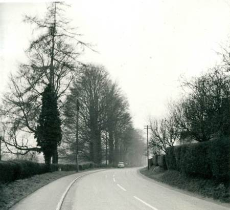 The Spring in 1961 - before the bungalows were built