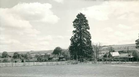 A Spring view in 1978