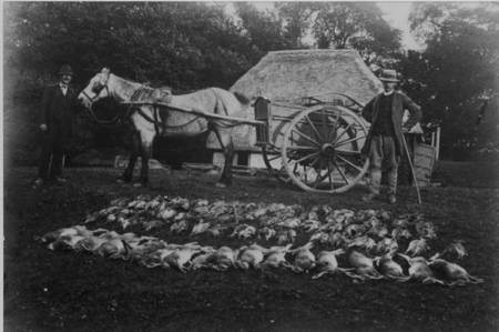 Result of a shoot at Knapp Farm in the 1920s