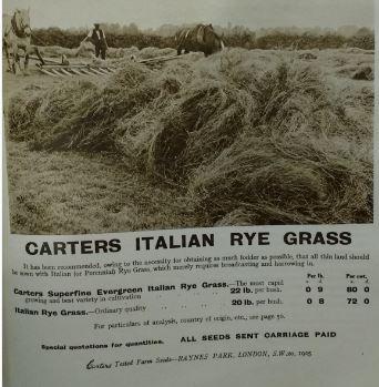 Farmers' Guide rye grass snip